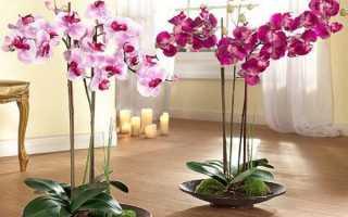 Домашние цветы в интерьере