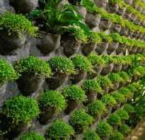 Декор стен зеленью
