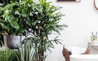 Комнатные цветы для интерьера