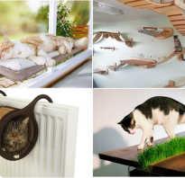Интерьер с кошками